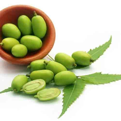 Neem-seed-&-oil---Vamsar-Exports